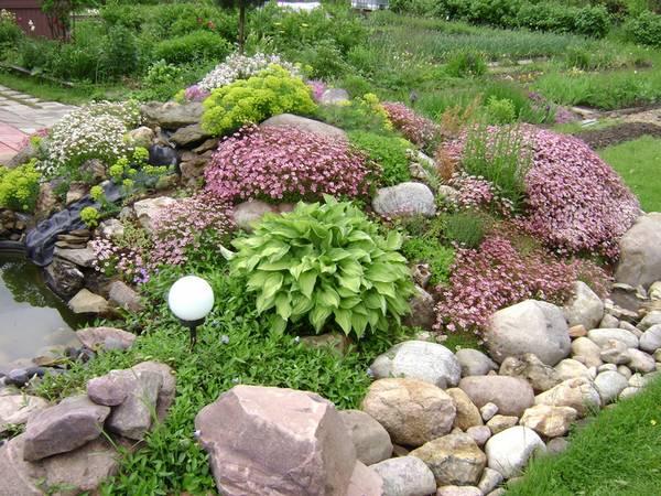 Альпийские горки своими руками и растения для них
